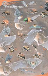 Passion pour les chauves-souris