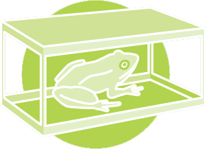 Frog in a box icon