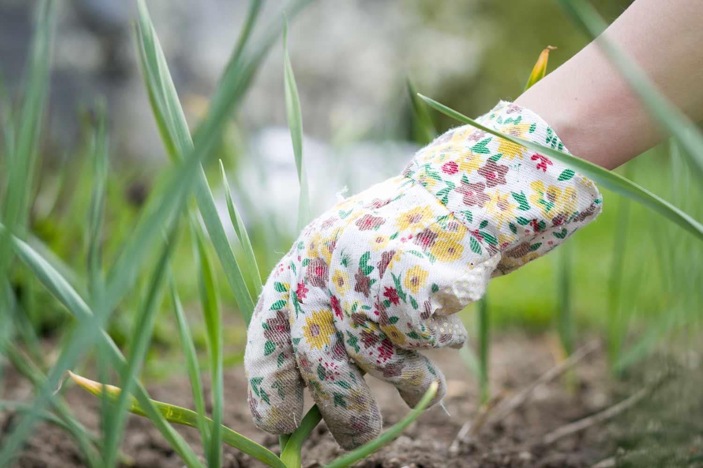Gloved hand gardening