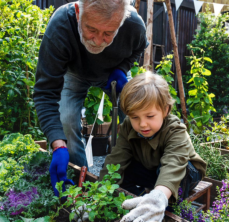 grandpa and child gardening
