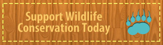 Support Wildlife Conservation Today