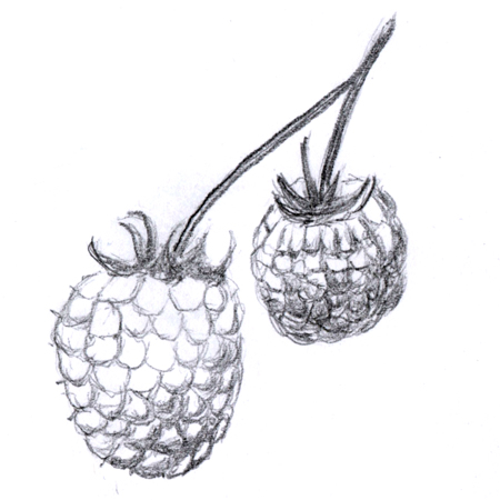 Fruit agrégé