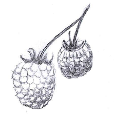 aggregatefruit.jpg thumbnail
