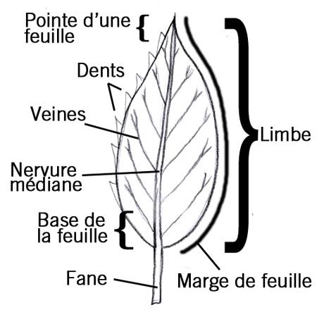 leaf_fr.jpg thumbnail