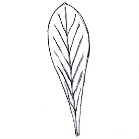 Oblanceolate leaf
