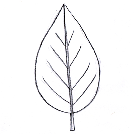 Ovate leaf
