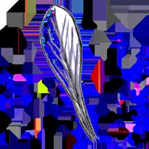 Feuille spatulée