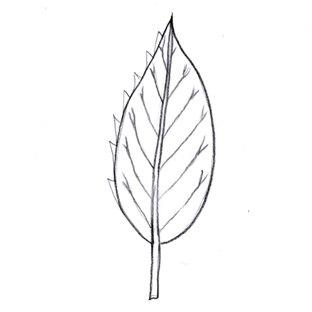 Simple leaf thumbnail