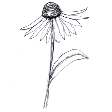 Single flower  thumbnail