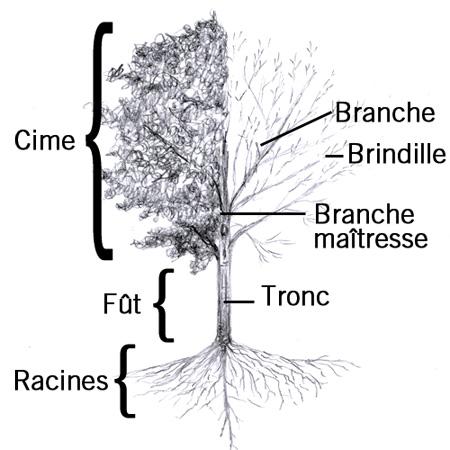 Branche thumbnail