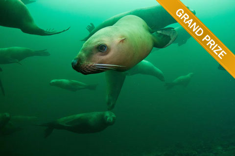 Grand Prize Winning Photo of Seals