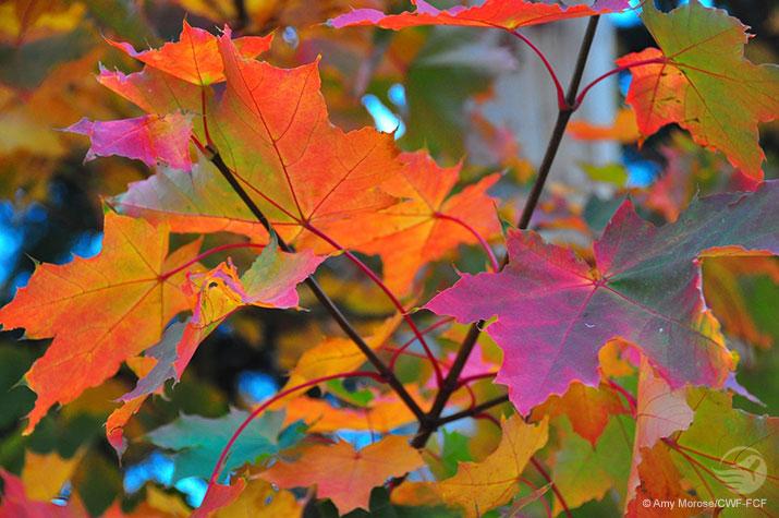 Grow Wild - Autumn 2014 cover photo
