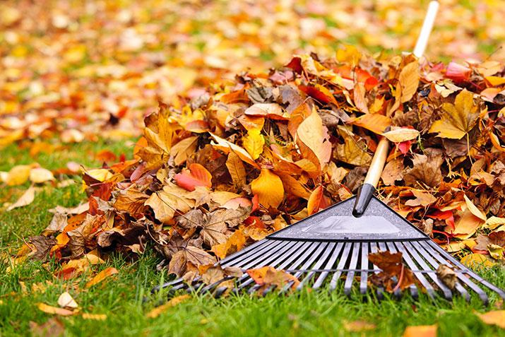 Raking leaves in autumn