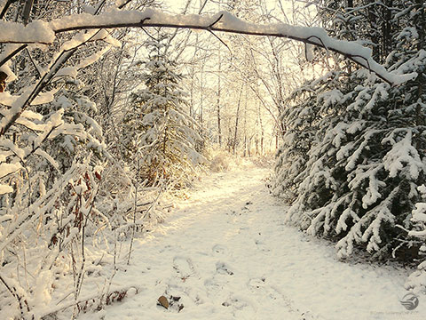 Grow Wild Winter 2014 First Snow Fall Wallpaper 480px