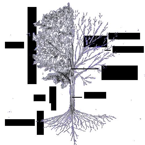 Tree anatomy