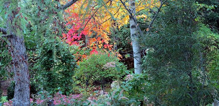 Garden of Gabrielle LaRue, Quebec