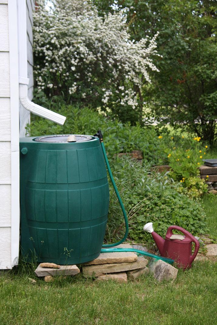 Rain barrel in backyard
