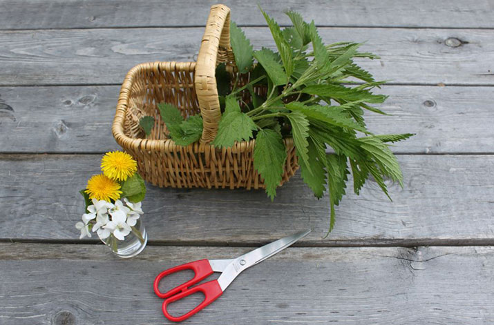 Plants and a basket