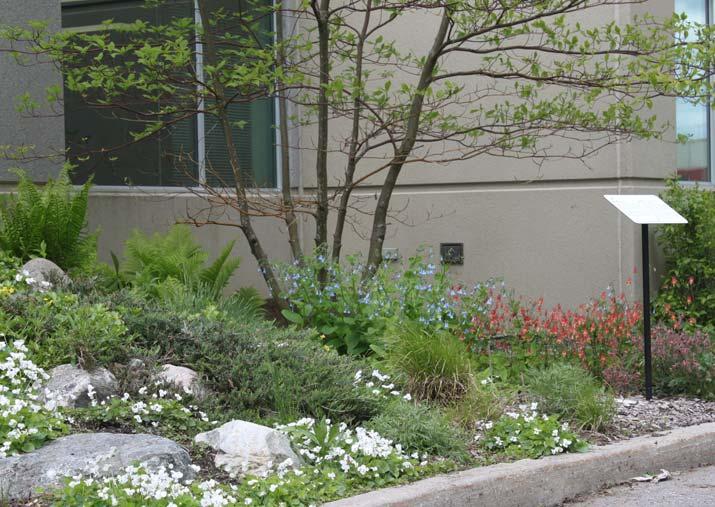 CWF garden with columbine flowers
