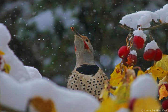 Bird with snow berries