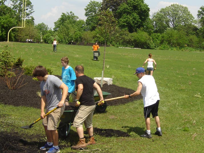 Planting trees and shrubs beside the sports field