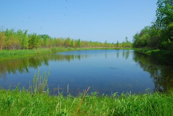 Photo of a lake surrounded by marshland and trees