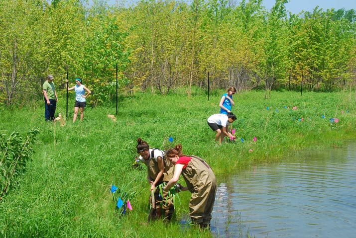 People restoring a marshland