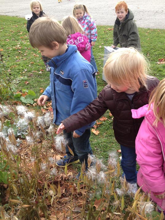 Kids discover milkweed pods and wishies
