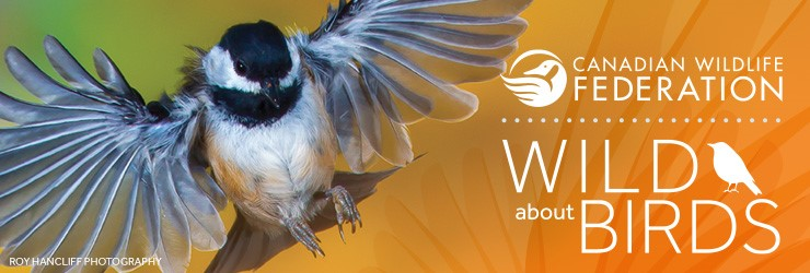 Wild About Birds Header