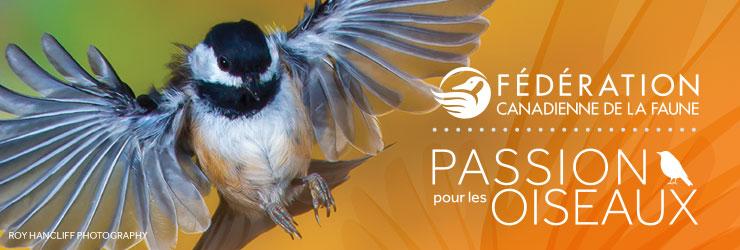 Wild about birds header FR
