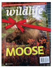 Abonnement à un magazine