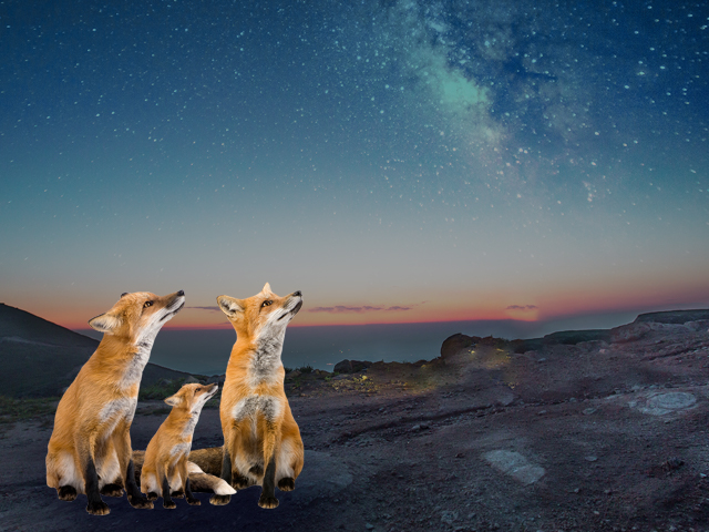 fox family looking at sky