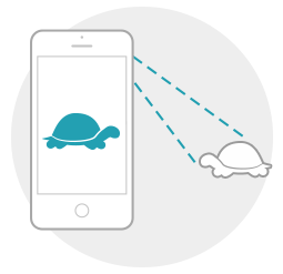How it works - take a photo of a turtle