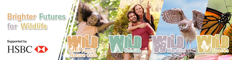 HSBC WILD Programs Banner in English