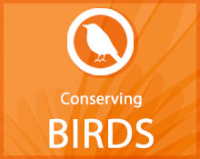 Conserving Birds icon