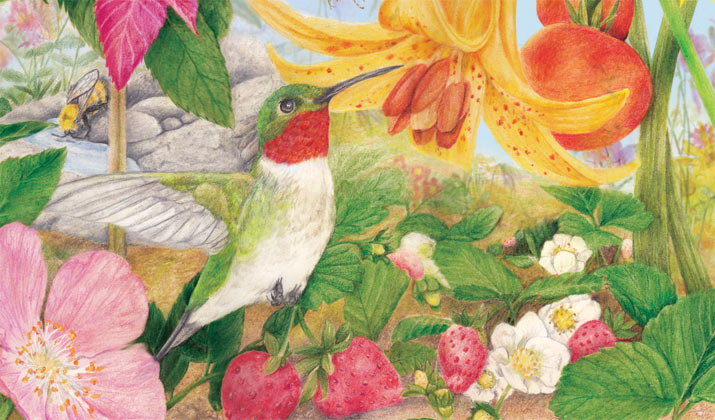 Hummingbird with a tomato lily illustration