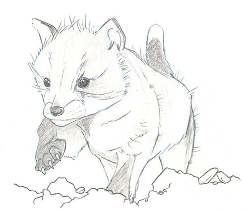 Illustration of small red fox