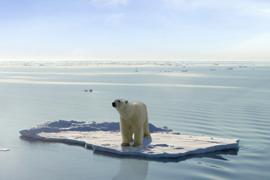Polar bear on a floating piece of ice
