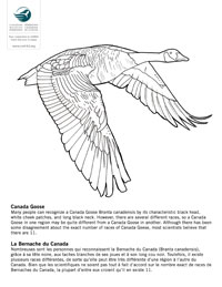 Canadian Wildlife Federation Colouring Pages