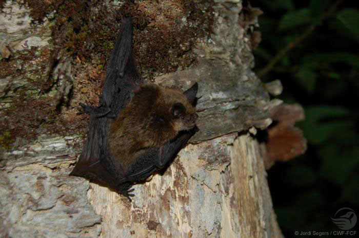 Brown bat on a tree trunk