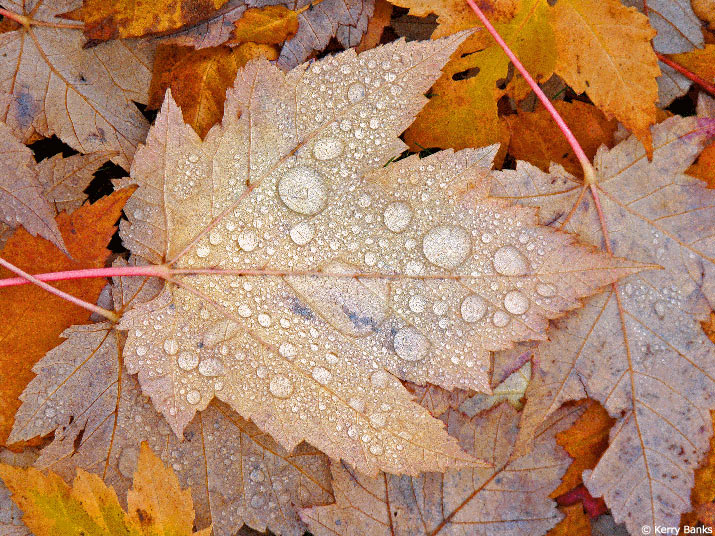 Fall leaves with droplets of water on them