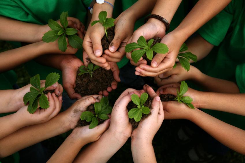 kids planting - hands - 800