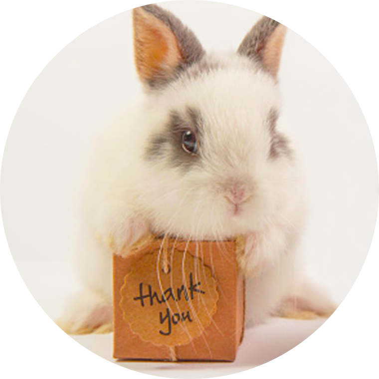 thank you card with bunny