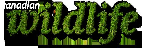 canadian wildlife magazine logo stylized