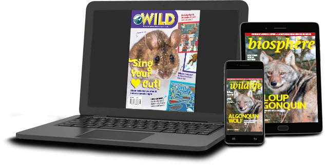 Tablet showing Biosphere magazine cover