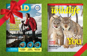 magazines on homepage 286