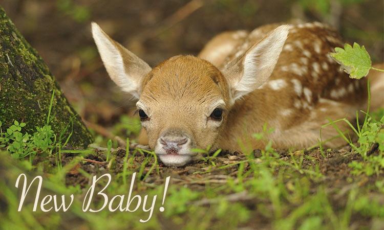 newborn baby header fawn