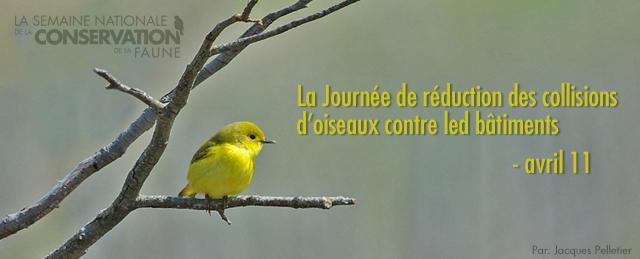 nww bird header fr