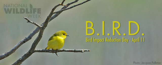 Bird Impact Reduction Day banner