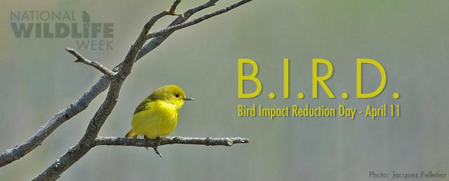 Bird Impact Reduction Day banner